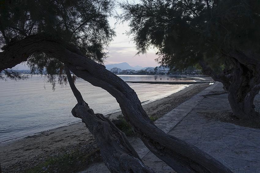 Bucht Port de Pollença Bäume
